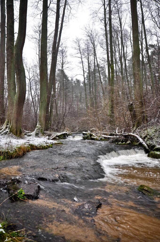Rzeka Sopot Puszcza Solska Roztocze