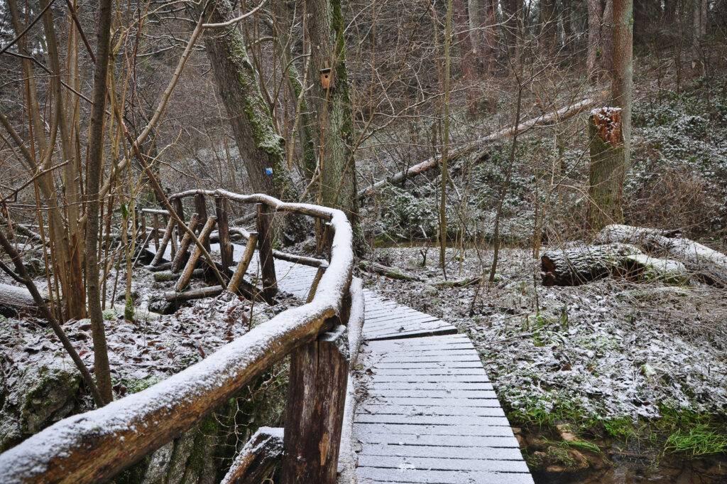 Rezerwat Czartowe Pole Roztocze rzeka Sopot