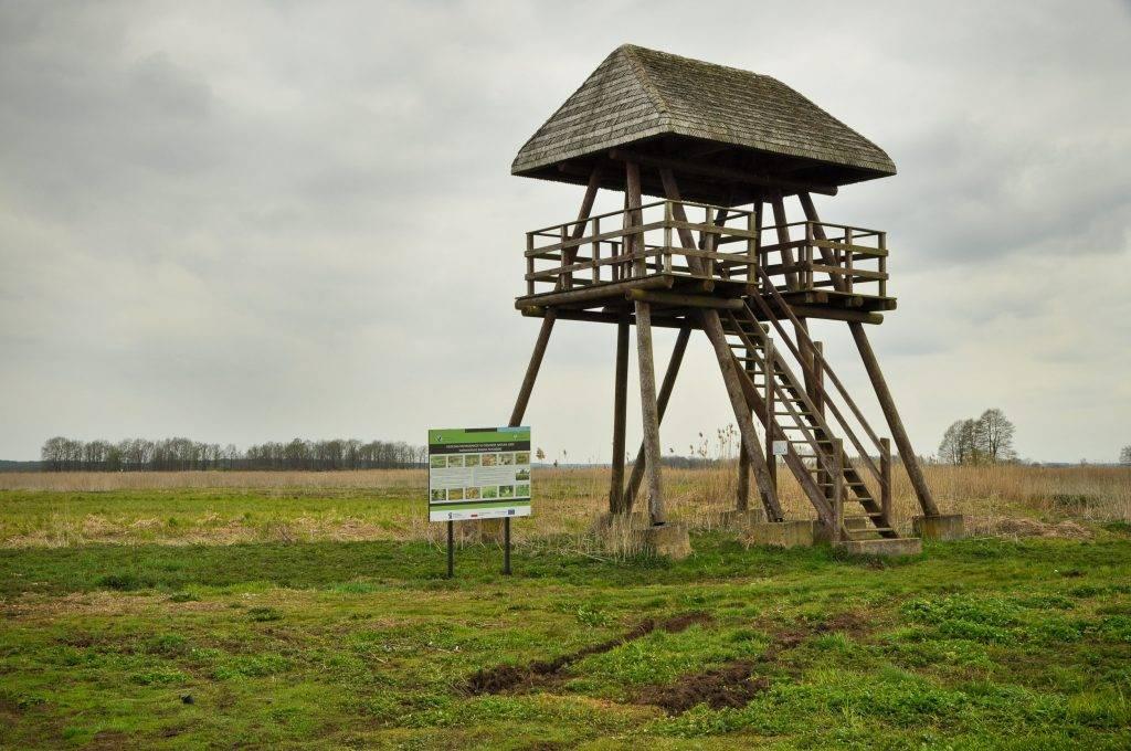 wieża widokowa Topilec w Narwiańskim Parku Narodowym