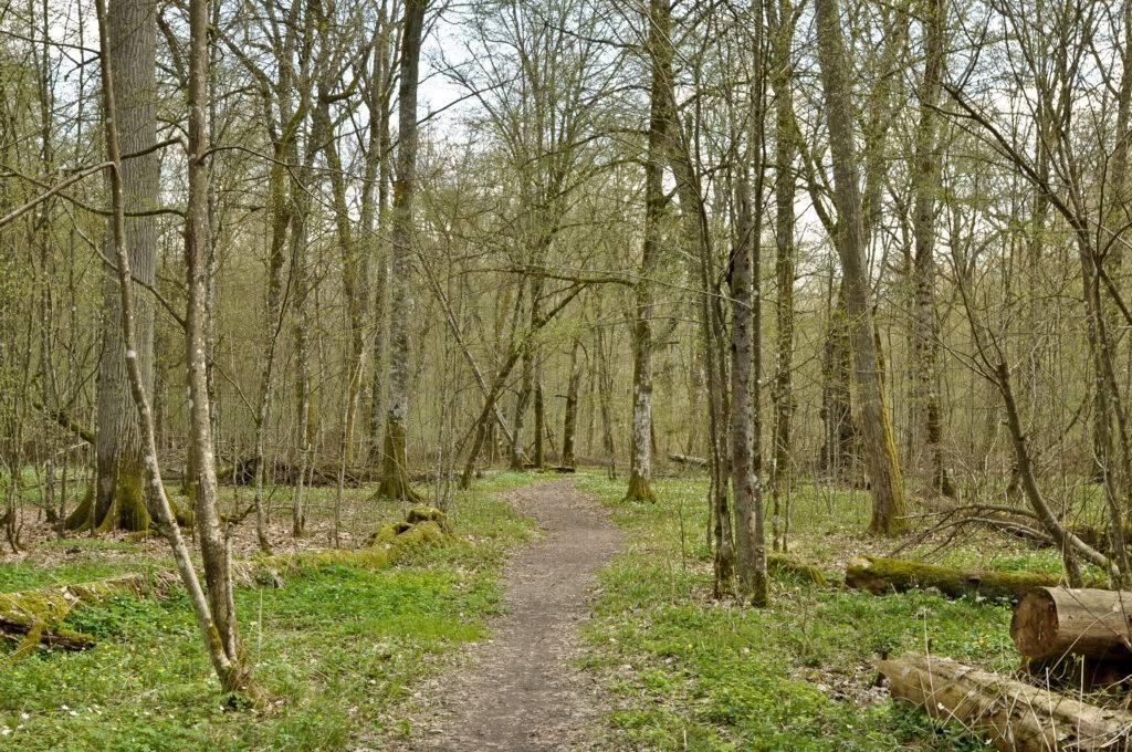 szlak Puszczańskie Drzewa