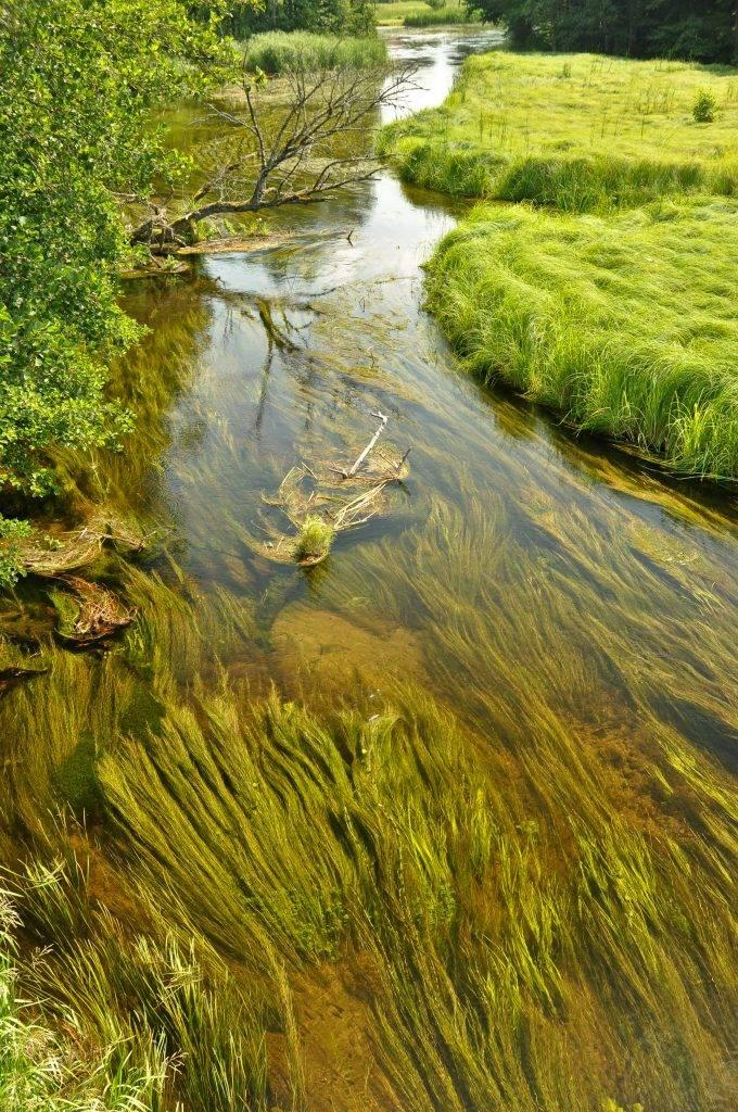 rzeka Hańcza